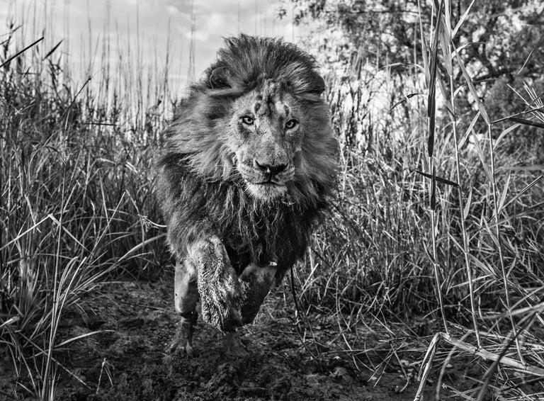 David Yarrow Black and White Photograph - Gold