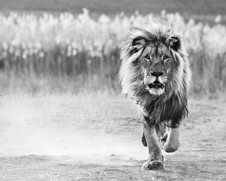 David Yarrow Black and White Photograph - One Foot on the Ground