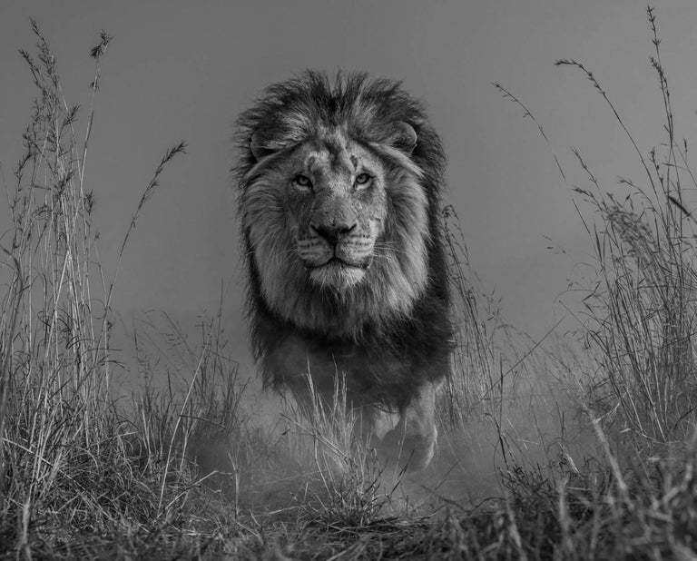 David Yarrow Portrait Photograph - The King and I