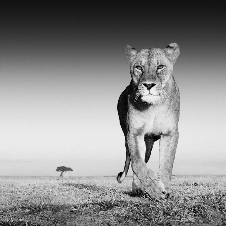 David Yarrow Black and White Photograph - The Prize