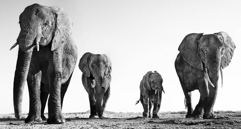 David Yarrow Black and White Photograph - Boy Band
