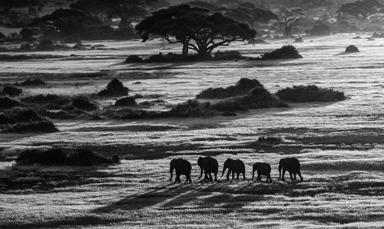 David Yarrow Black and White Photograph - Dawn Commute