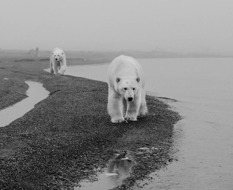 David Yarrow Black and White Photograph - Ghost Writers