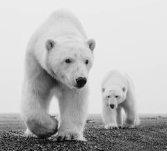 David Yarrow - Kaktovic
