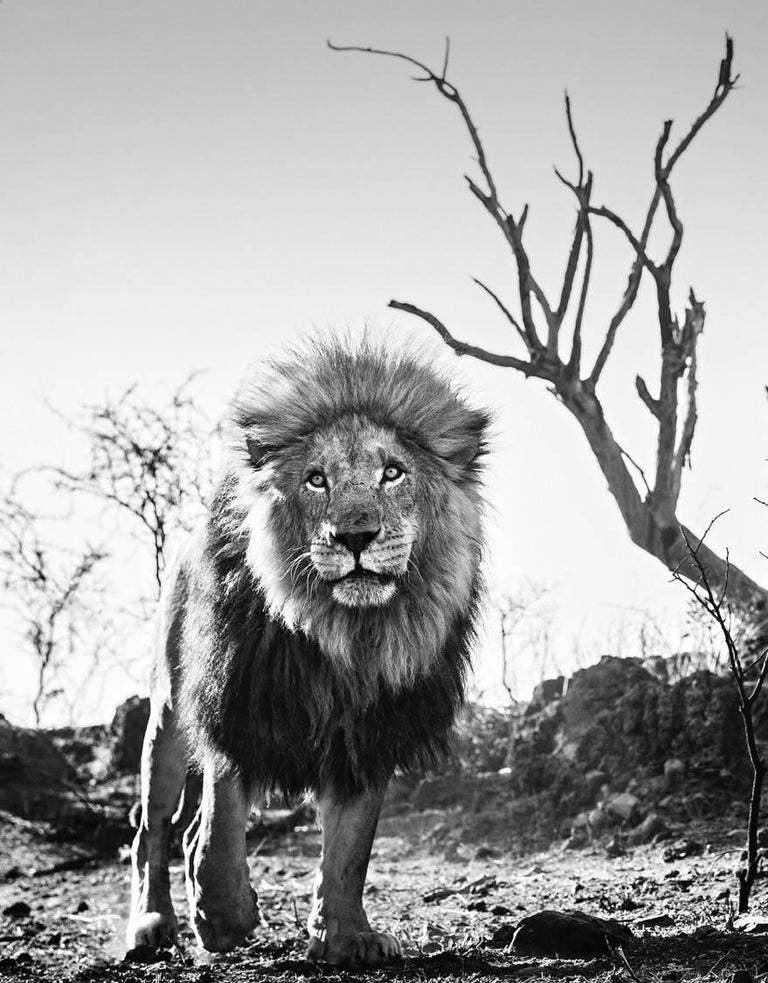 David Yarrow Black and White Photograph - Cry Me A River