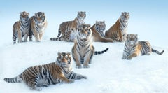 The Siberians