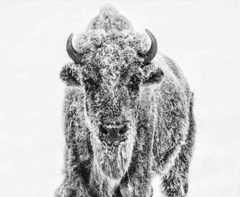 David Yarrow Black and White Photograph - Ice Age