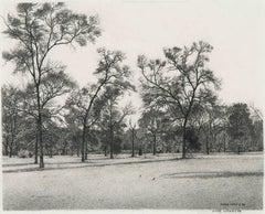 Early Spring - Cedar Elm