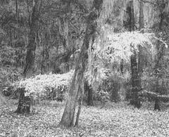 Lyric Tree, Jackson Hill Park, Angelina National Forest, Texas