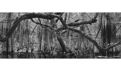 Branch Structure and Cypress Knees, Baxter Slough, Silsbee, Texas