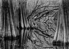 Tree Rhythms and Reflections, Baxter Slough, Silsbee, Texas