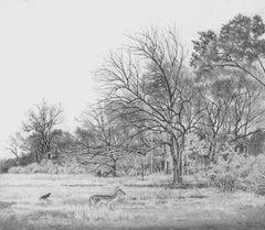 Under the Bois d'Arc Tree