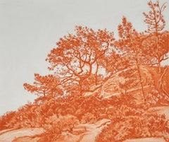 Twisted Torrey Pine