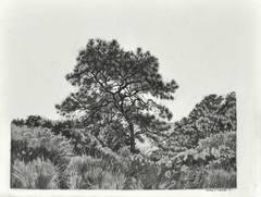 Bent Tree, Torrey Pines