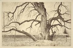 Old Cottonwood