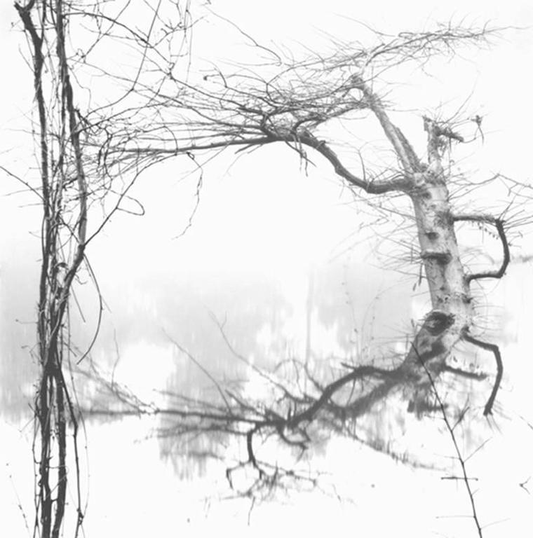 David H. Gibson Landscape Photograph - Vine and Tree, Village Creek, Texas