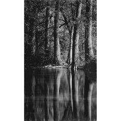 Cypress Trees, Reflections, Cypress Creek, Wimberley, Texas