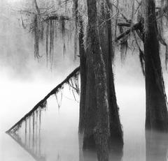 Caddo Stillness, Mill Pond, Caddo Lake, Texas