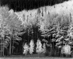 Aspen Alcove, Sunshine Mesa, Telluride, Colorado