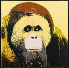 Orangutan (FS II.299)
