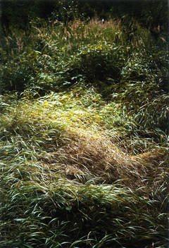 Green Wave, from the series Forest
