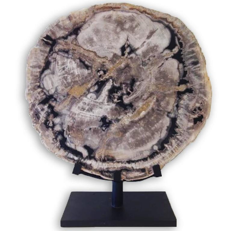 PETRIFIED WOOD ON STAND - Art by Unknown
