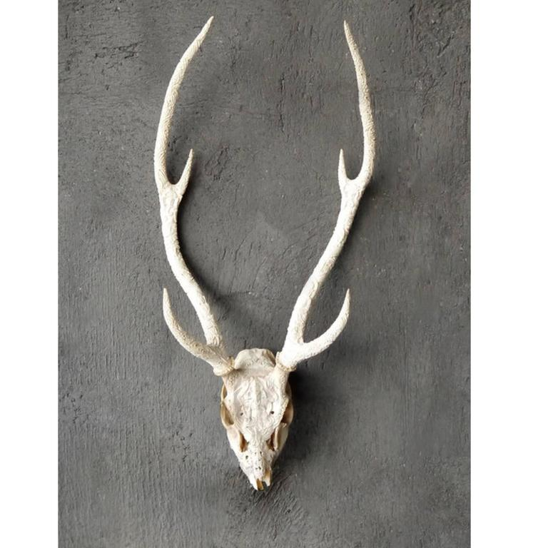 Unknown deer skull and antler carving for sale at stdibs