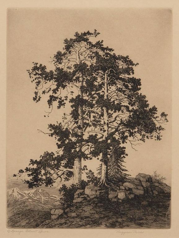 Ragged Pines (Colorado)