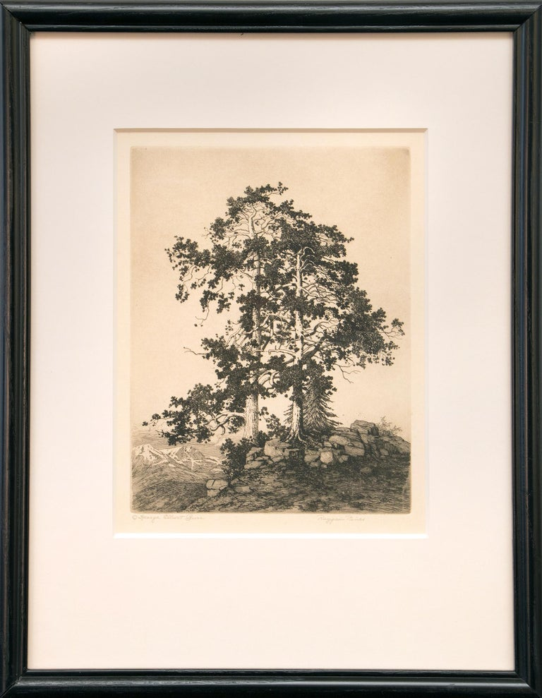 George Elbert Burr Ragged Pines Colorado Print For