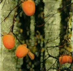 PERSIMMONS- PENGROVE I, plants, orange fruit, green nature background