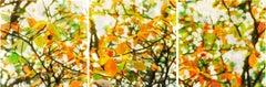 BRANDY CREEK III, flower buds, orange, brown, green, hyper-realistic