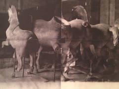 Horse Statues, Unseen Versailles, 1981