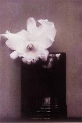 Mondrian Orchid