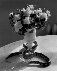 Still Life with Flowers and Snake, New York