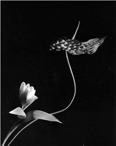 Tulip with Anthurium, Oyster Bay, New York