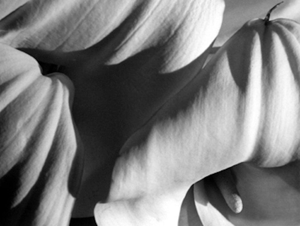 Horst P. Horst Black and White Photograph - Richardia Africana, New York