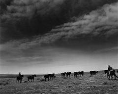 Cataract Land and Livestock Company, Williams, Arizona, 1985
