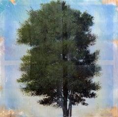 Tree Through Window Pane