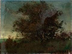 Tanglewood #1 - small, dark, tree, landscape, nature, acrylic, resin on board