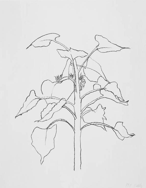 <i>Sunflower I,</i> 2004, by Ellsworth Kelly, offered by Marlborough Graphics