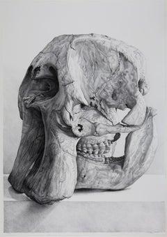 Craneo de elefante (elephant skull)