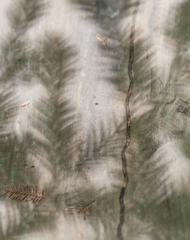 """""""Quiétude (Redwood)"""" Mendocino, CA Photograph, 2015"""