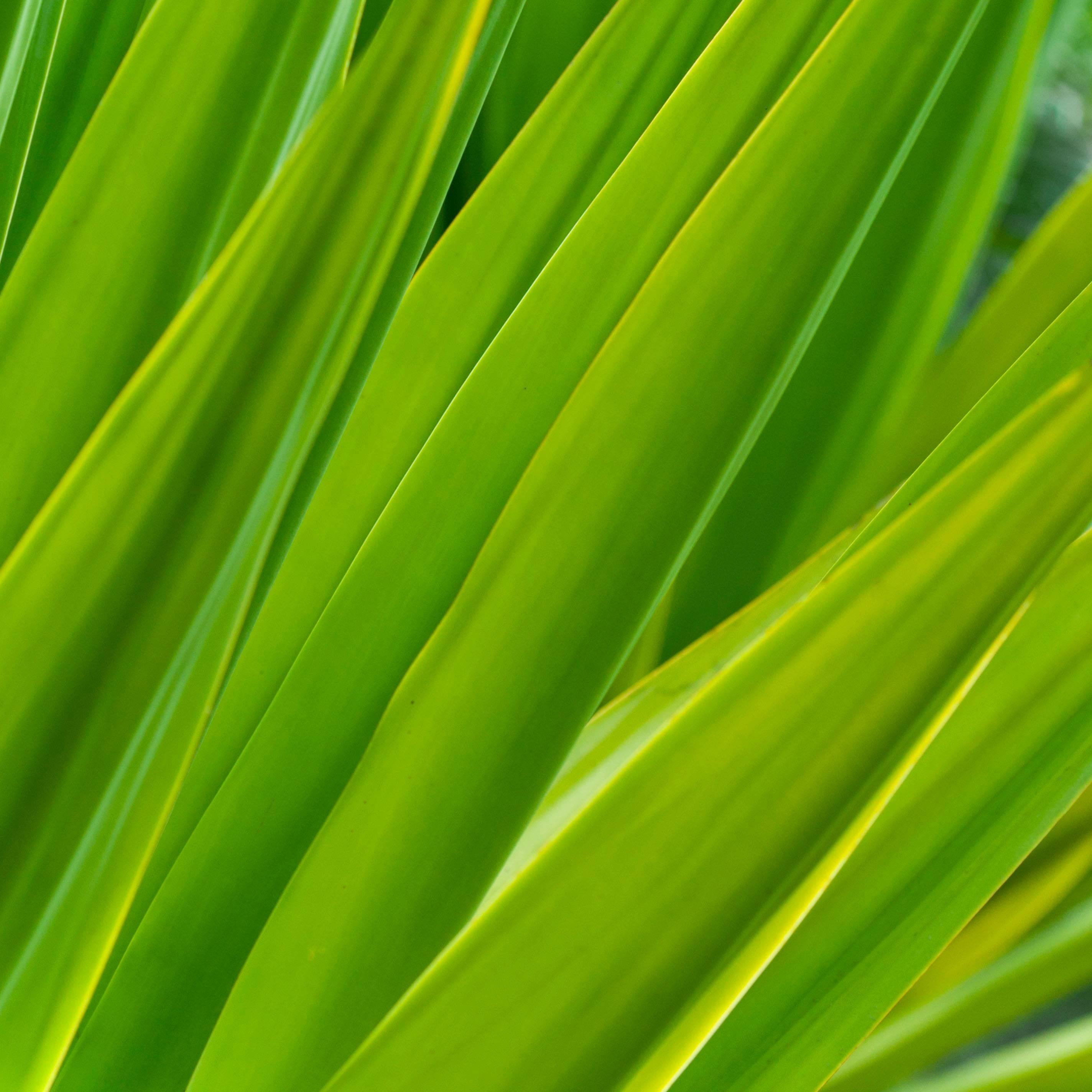 """""""Texture 7: Chlorophyll"""" Big Island, Hawaii Photograph, 2015"""