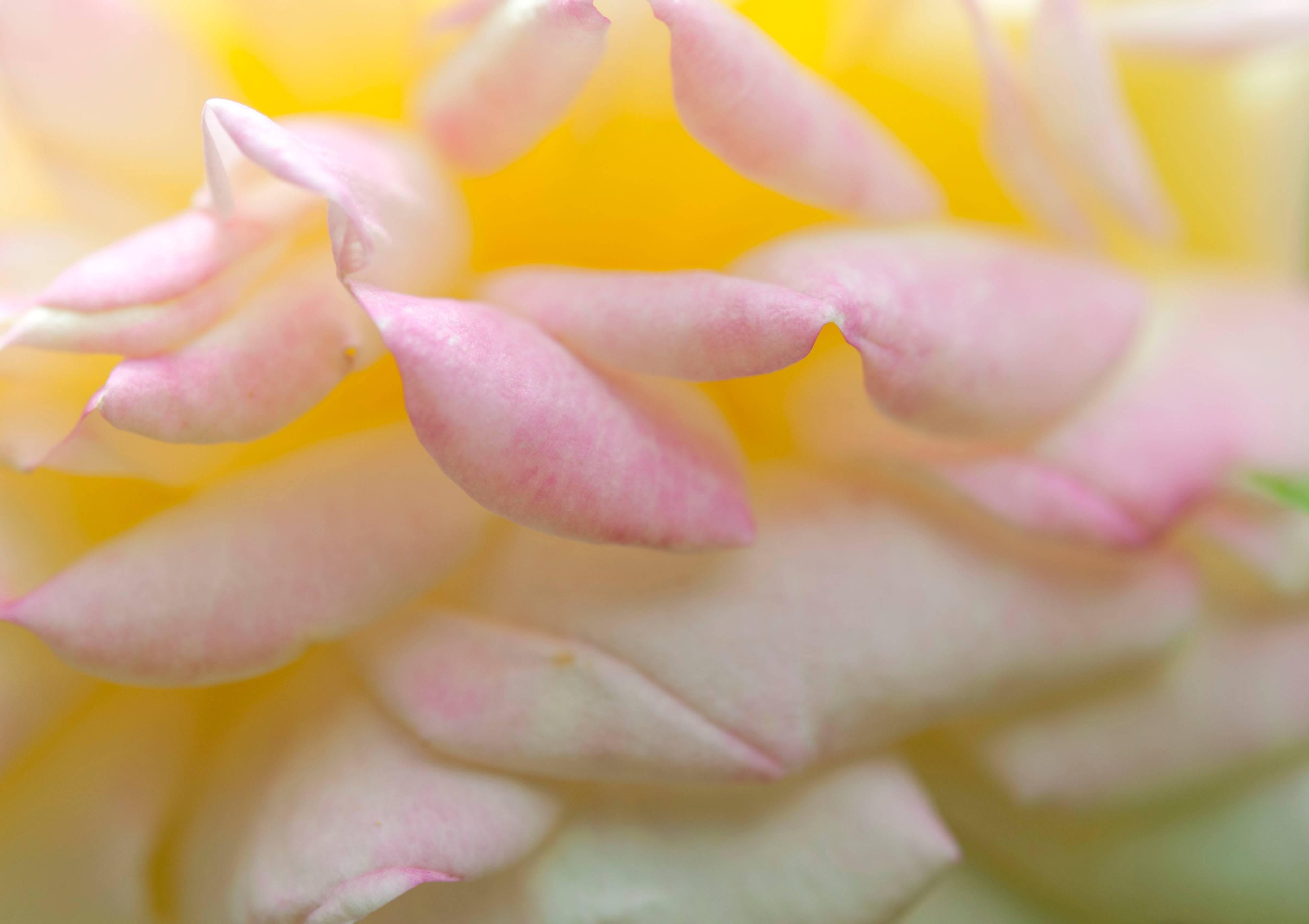 """Alchimiste"" California Botanical Still Life Photograph, 2014"