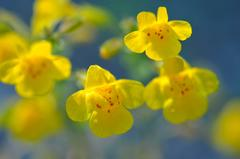"""Yellow Monkeys"", Mendocino, CA Photograph"