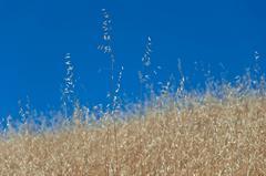 """""""Golden Mendocino"""" Landscape Photograph, 2012"""