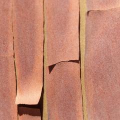 """Texture 5: Madrone Bark"" Mendocino, California"