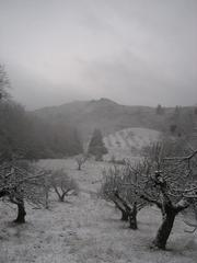 """Orchard in Snow"" Framed Mendocino Photograph, 2010"