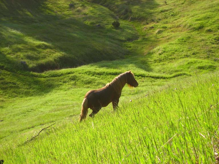 """Stallion in Green Meadow"" Mendocino, CA"