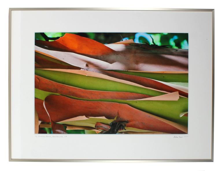 """""""Madrone Bark"""" Large Mendocino Photograph"""